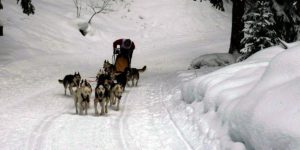 sled-dog-race with cloudtimer